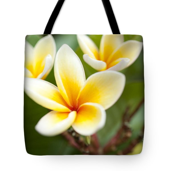 Tote Bag featuring the photograph White And Yellow Plumeria Flowers by Charmian Vistaunet