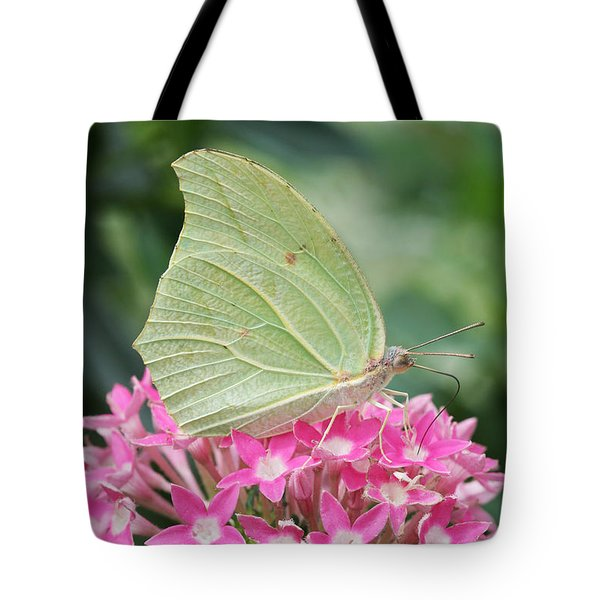 Tote Bag featuring the photograph White Angled Sulphur by Judy Whitton