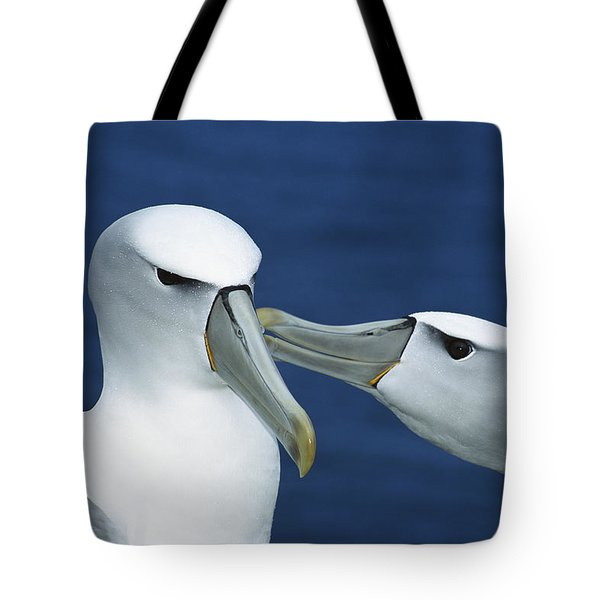 White-capped Albatrosses Courting Tote Bag by Tui De Roy