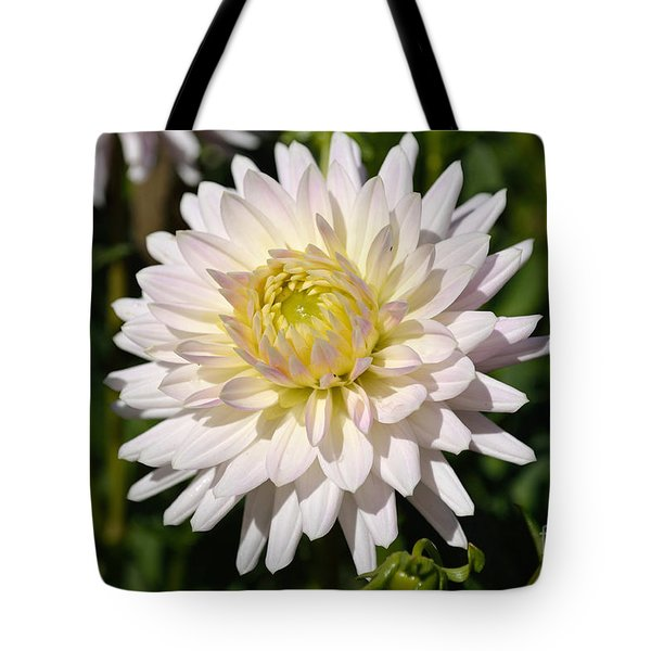 Tote Bag featuring the photograph White Dahlia Flower by Scott Lyons
