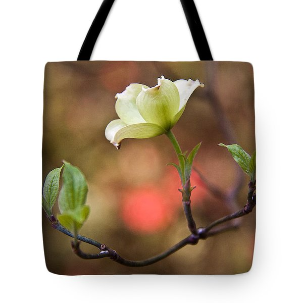 White Dogwood In Early Spring Tote Bag by Frank Tozier