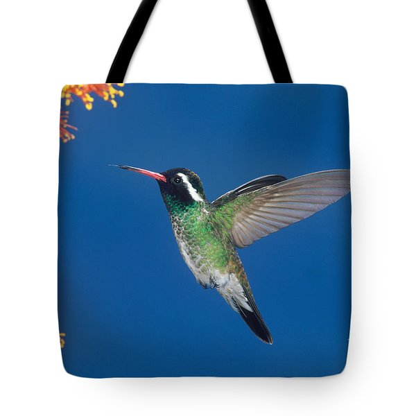 White-eared Hummingbird Tote Bag by Anthony Mercieca