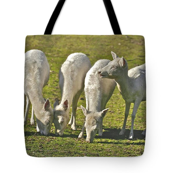 White Fallow Deer Mt Madonna County Park Tote Bag