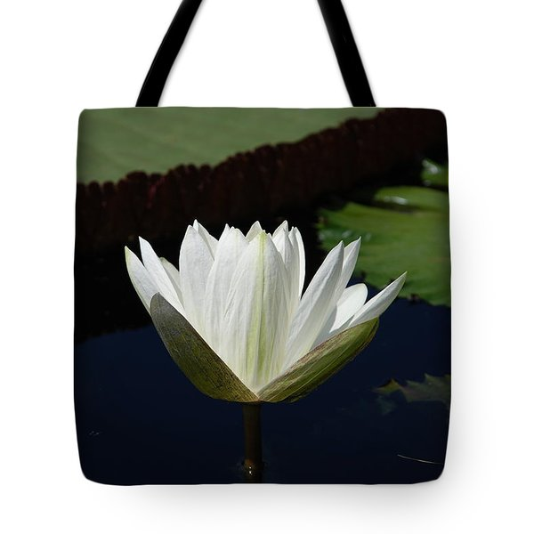 Tote Bag featuring the photograph White Flower Growing Out Of Lily Pond by Jennifer Ancker
