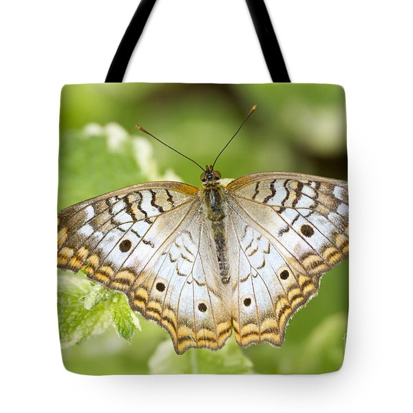 White Peacock Tote Bag by Bryan Keil
