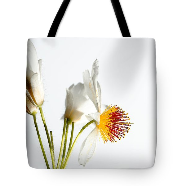 White Sparmannia Africana Plant. Tote Bag