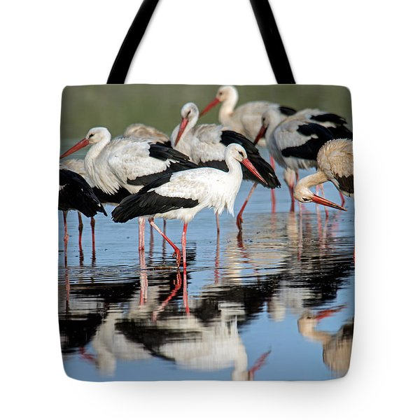 White Storks Ciconia Ciconia In A Lake Tote Bag