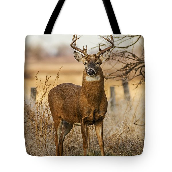 Tote Bag featuring the photograph White-tail Buck by Rob Graham