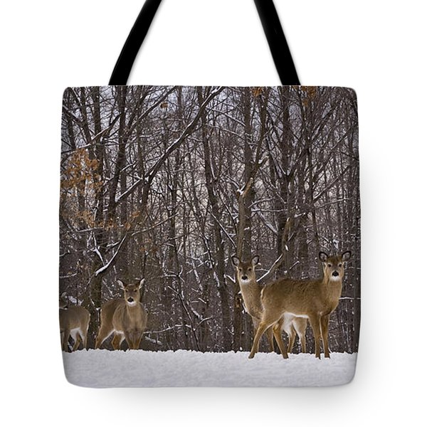 White Tailed Deer Tote Bag