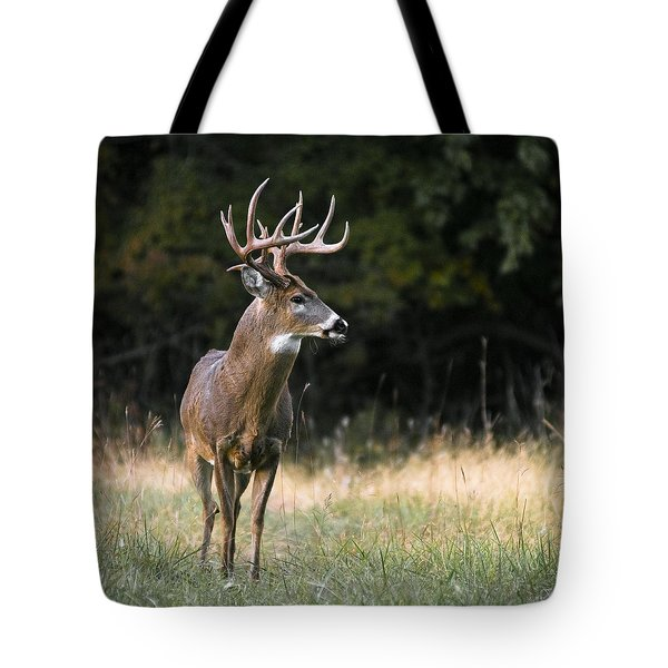 Whitetail At Sunset Tote Bag