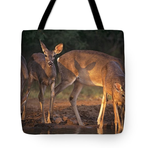Whitetail Deer At Waterhole Texas Tote Bag