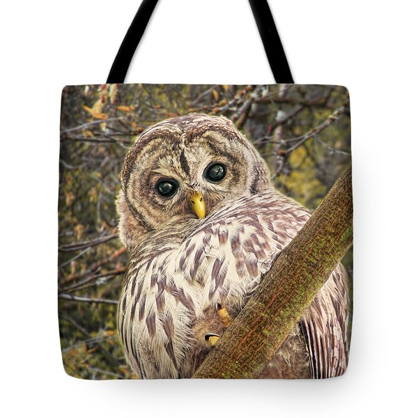 Who Who Are You Barred Owlet Tote Bag by Jennie Marie Schell