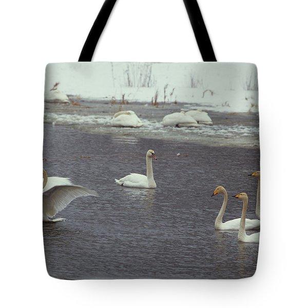 Whooper Swans, Cygnus Cygnus, In Order Tote Bag