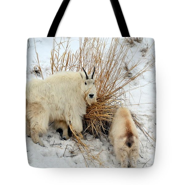 Tote Bag featuring the photograph Why Are You Watching Me by Dorrene BrownButterfield