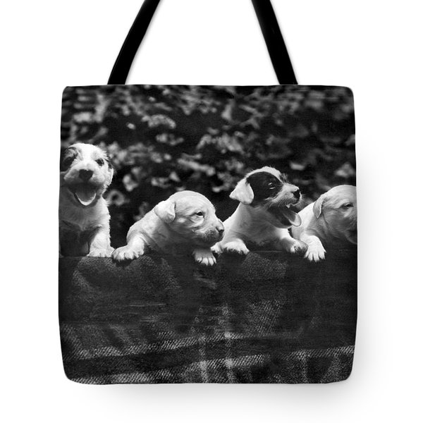 why I Love A Dog Prizes Tote Bag by Underwood Archives