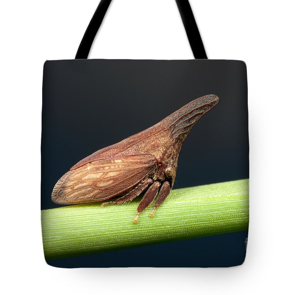 Widefooted Treehopper II Tote Bag by Clarence Holmes