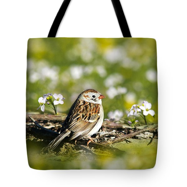 Wild Birds - Field Sparrow Tote Bag by Christina Rollo