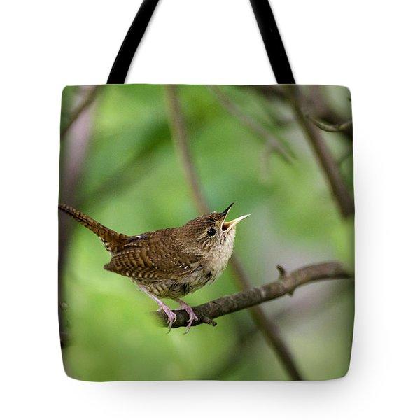 Wild Birds - House Wren Tote Bag by Christina Rollo
