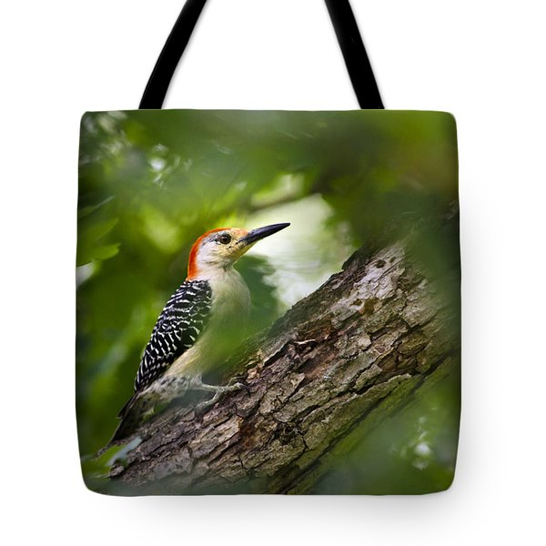 Red Bellied Woodpecker Tote Bag by Christina Rollo