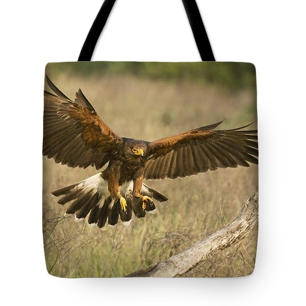 Tote Bag featuring the photograph Wild Harris Hawk Landing by Dave Welling
