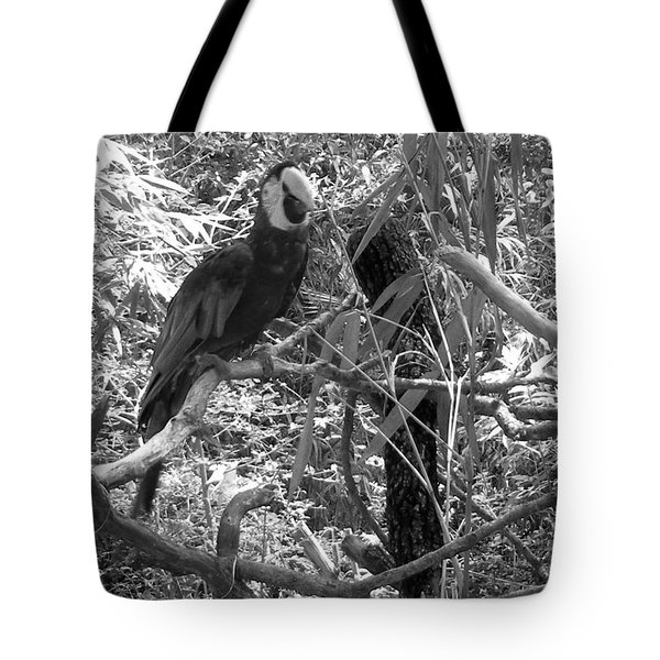 Tote Bag featuring the photograph Wild Hawaiian Parrot Black And White by Joseph Baril