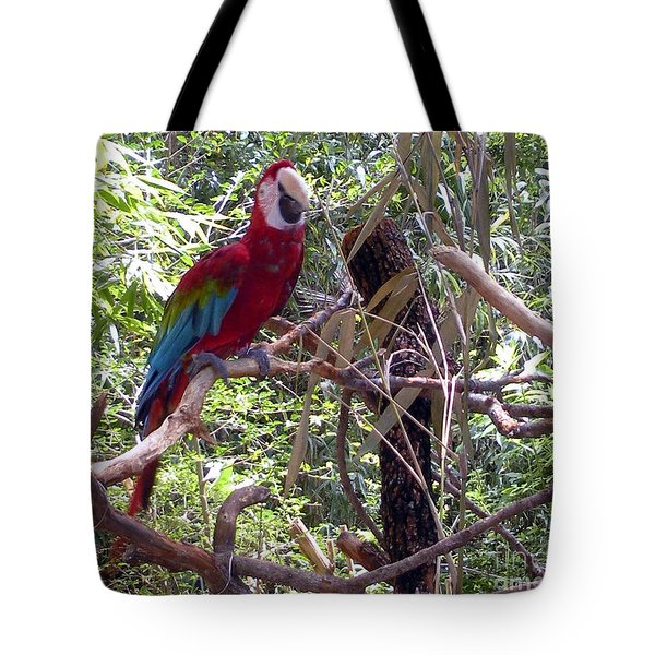 Tote Bag featuring the photograph Wild Hawaiian Parrot  by Joseph Baril