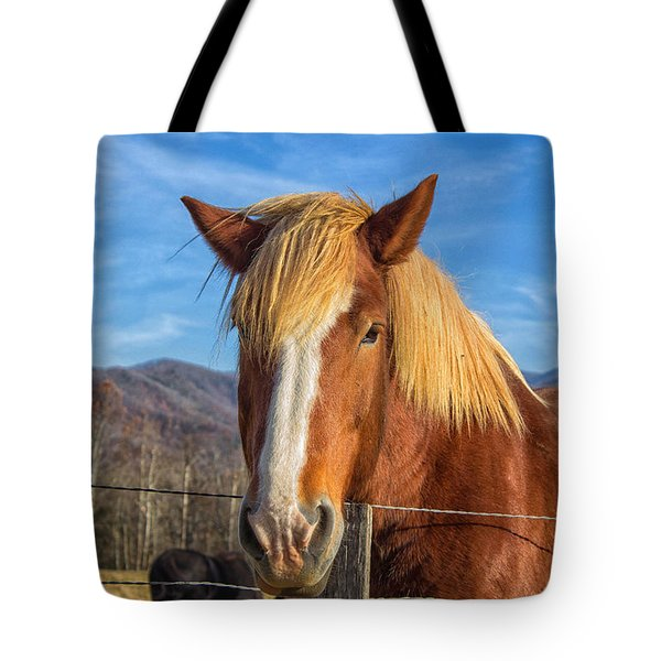 Wild Horse At Cades Cove In The Great Smoky Mountains National Park Tote Bag