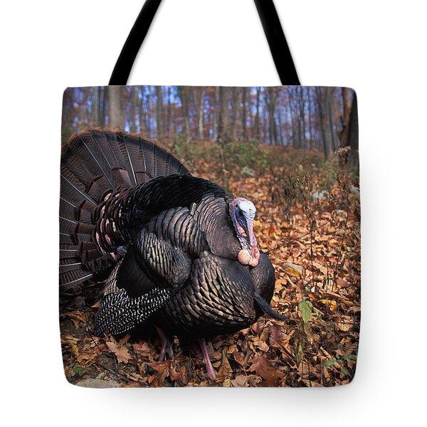 Wild Turkey Displaying Tote Bag by Len Rue Jr