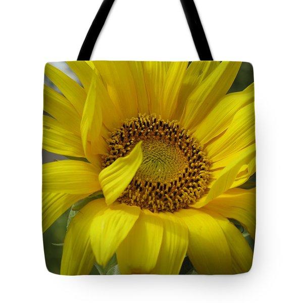Windblown Sunflower Three Tote Bag