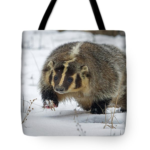 Tote Bag featuring the photograph Winter Badger by Jack Bell