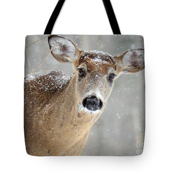 Winter Buck Tote Bag by Amy Porter