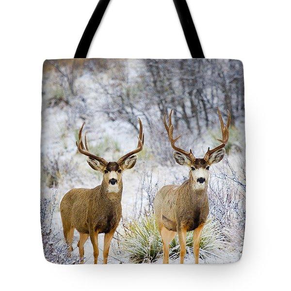 Winter Bucks Tote Bag