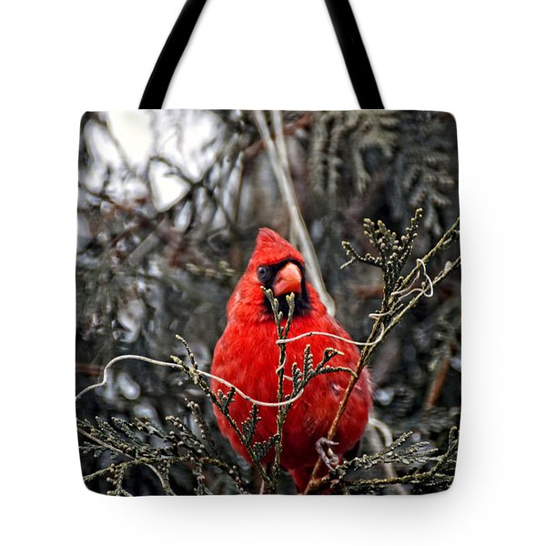 Winter Cardinal 03 Tote Bag by Thomas Woolworth