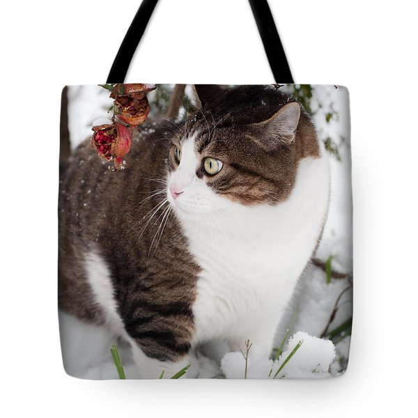 Tote Bag featuring the photograph Winter Cat by Laura Melis