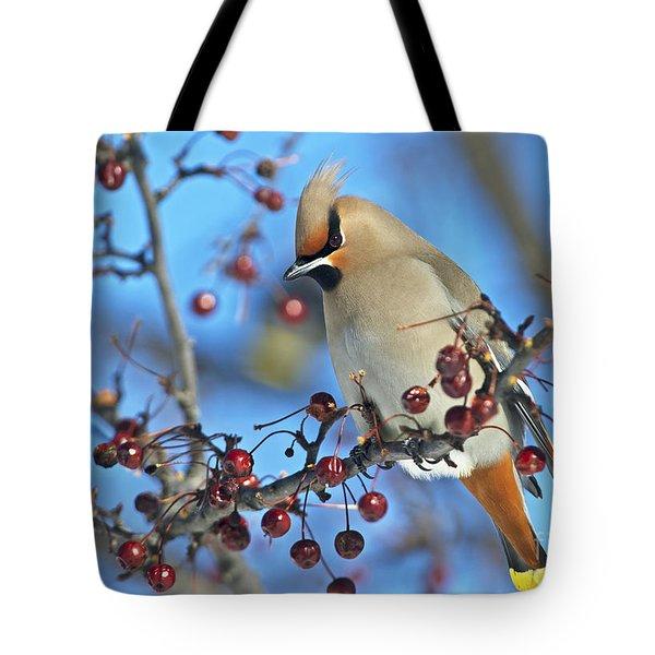 Winter Colors.. Tote Bag
