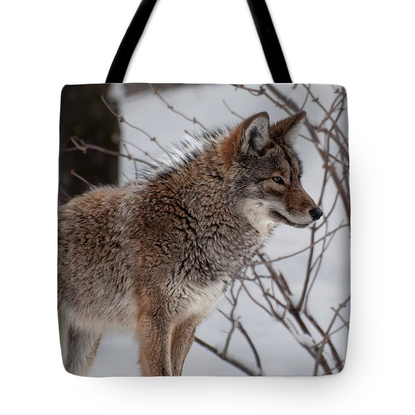 Tote Bag featuring the photograph Winter Coyote by Bianca Nadeau