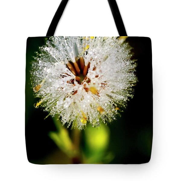 Tote Bag featuring the photograph Winter Dandelion by Pedro Cardona