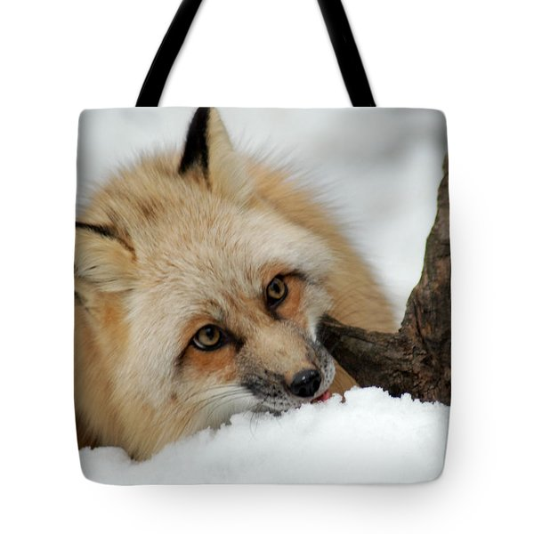 Winter Fox 2 Tote Bag by Richard Bryce and Family