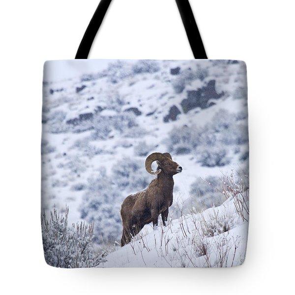 Winter Ram Tote Bag by Mike  Dawson