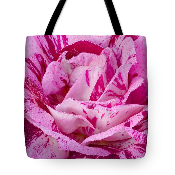 Tote Bag featuring the photograph Winter Rose  by Heidi Smith