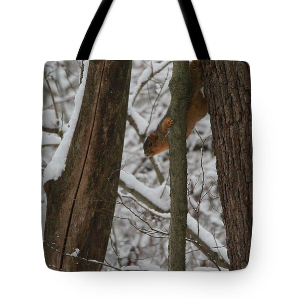 Winter Squirrel Tote Bag by Dan Sproul