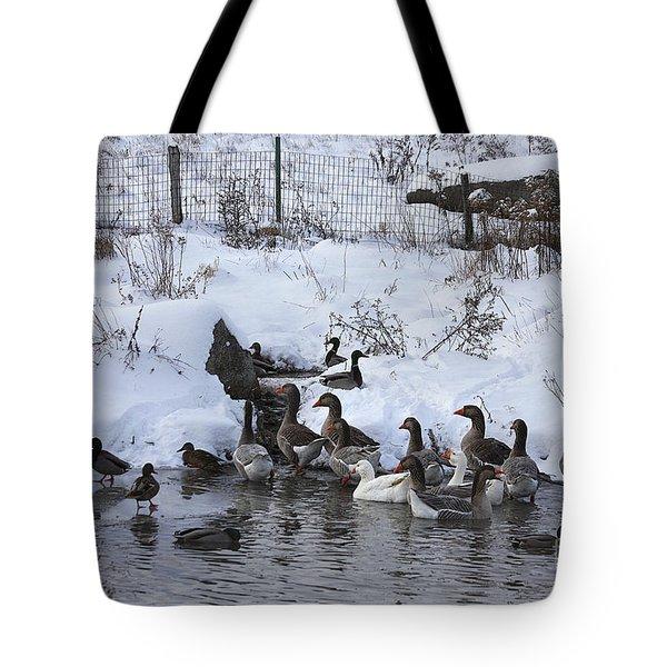 Winter Swimming Hole Tote Bag by Deborah Benoit