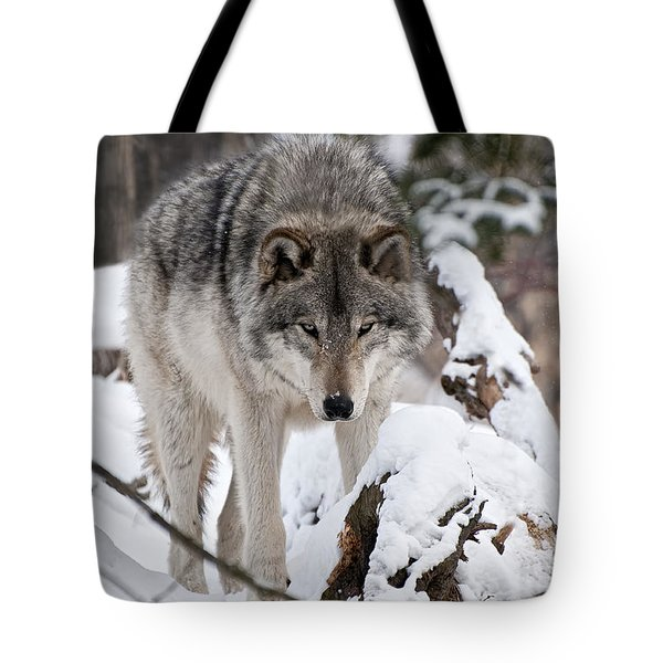 Tote Bag featuring the photograph Winter Timber Wolf by Wolves Only
