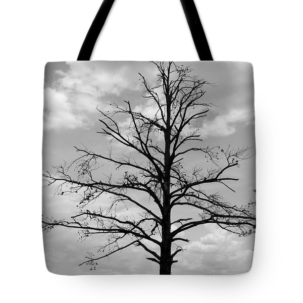 Winter Tree Tote Bag by Andrea Anderegg