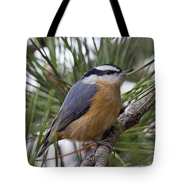 Winter Visitor - Red Breasted Nuthatch Tote Bag