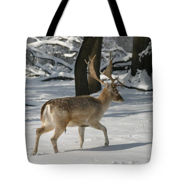 Winter Walk Tote Bag by Living Color Photography Lorraine Lynch