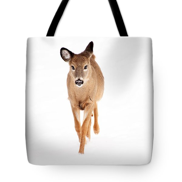 Winters Young Tote Bag by Karol Livote
