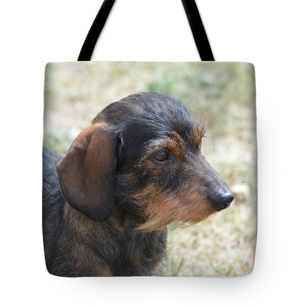 Wire Haired Daschund Tote Bag