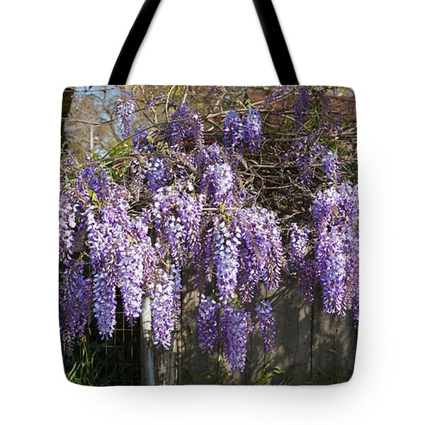 Wisteria Flowers In Bloom, Sonoma Tote Bag