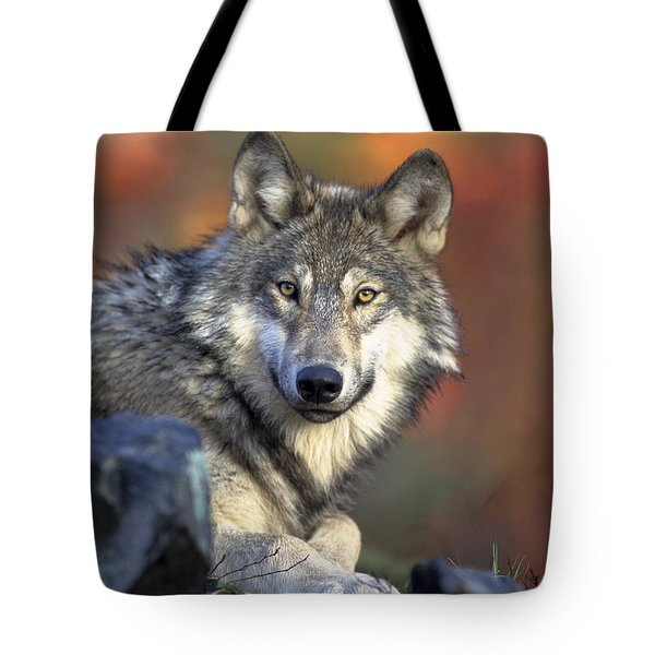 Tote Bag featuring the photograph Wolf Predator Canidae Canis Lupus Hunter by Paul Fearn